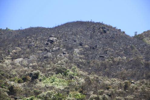 Gần 100 ha rừng đã bị thiêu rụi.