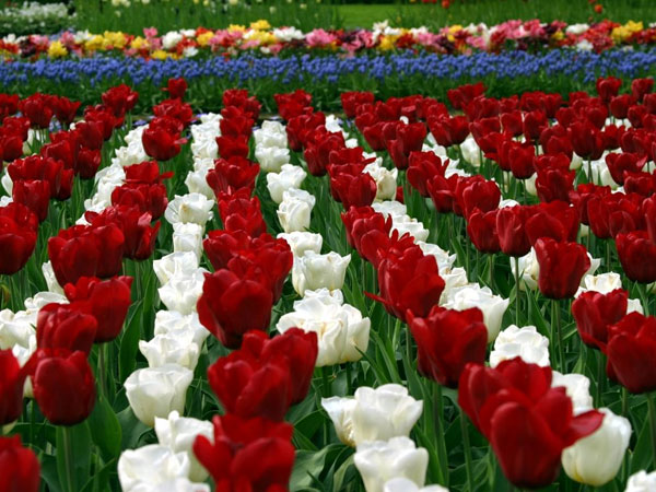 Hoa nở nhanh hơn vì biến đổi khí hậu