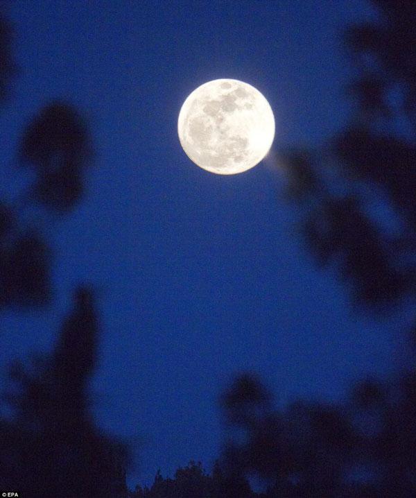 Siêu trăng trên một khu rừng ở Jerusalem, Israel.