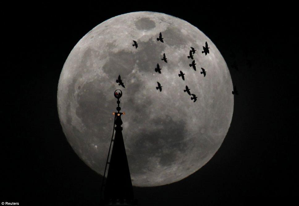 Một đàn chim bay qua nhà thờ dưới ánh trăng sáng nhất trong năm ở Amman, Jordan.