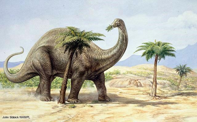 Loài khủng long Apatosaurus được cho là tạo ra nhiều khí thải