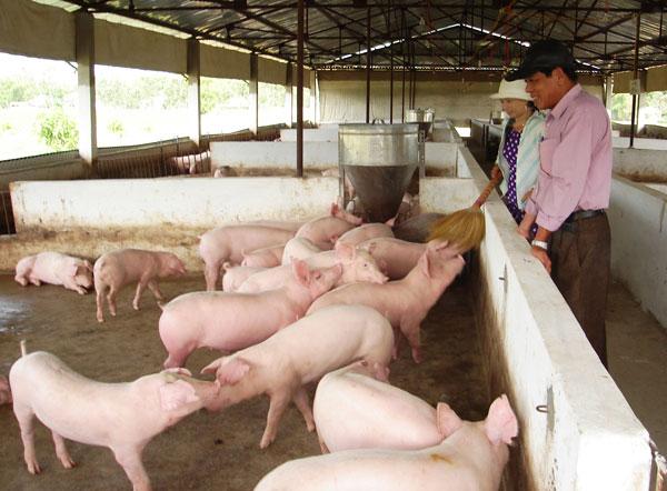 Lợi ích của dùng chế phẩm sinh học trong chăn nuôi