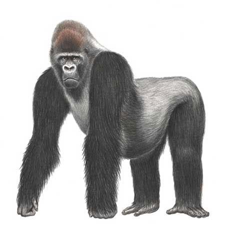 Phát hiện khỉ cực kỳ quý hiếm