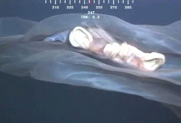 Video: Sinh vật biển bí hiểm mới được phát hiện