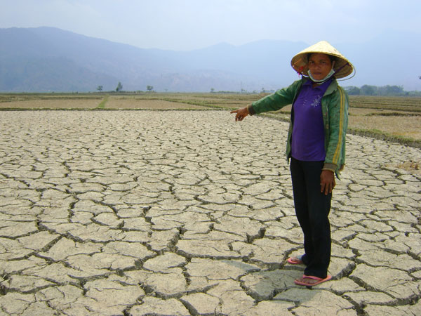 Cả nước có gần 50.000ha cây trồng bị khô hạn cục bộ