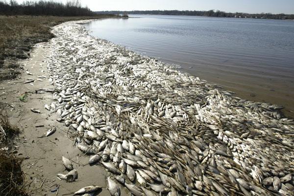 Cá chết hàng loạt trên thượng nguồn sông Gianh