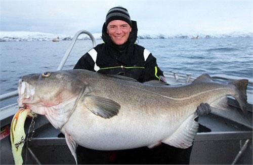 Con cá tuyết khổng lồ nặng gần 42kg