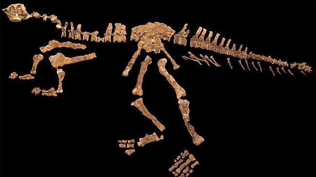 Loài khủng long mới có cánh tay tí hon