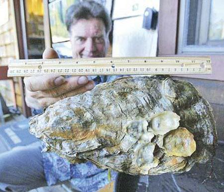 Con hàu lớn nhất thế giới