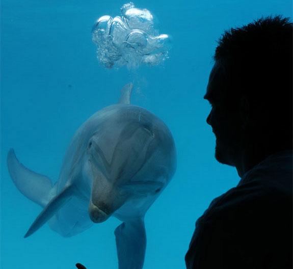 Thiết bị giúp người nói chuyện với cá heo