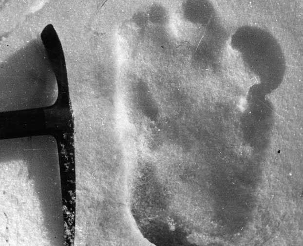 Truy tìm dã nhân Bigfoot