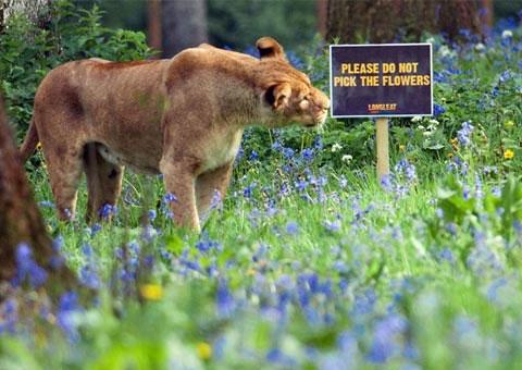 Ảnh đẹp: Động vật nghỉ hè