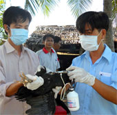 Phần mềm cảnh báo dịch bệnh của Việt Nam