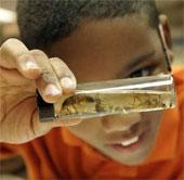 Viễn cảnh côn trùng xâm lăng vũ trụ