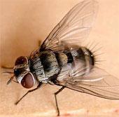 Não ruồi hoạt động giống não người?