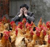 Trung Quốc công bố nguồn gốc H7N9