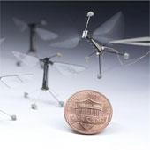 Robot côn trùng lần đầu bay có kiểm soát