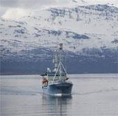 Báo động tình trạng axít hóa tại Bắc Băng Dương