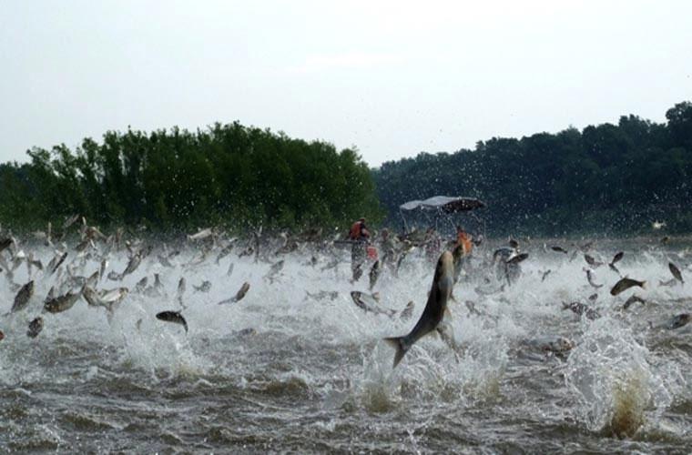 Cá chép châu á
