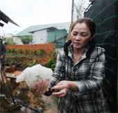 Mưa đá lớn tại Đà Lạt gây thiệt hại nặng
