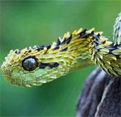 Những loài động vật kỳ dị tới khó tin (2)