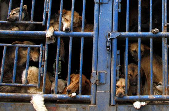Trung Quốc dùng chó dự báo động đất
