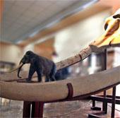 Tìm thấy hóa thạch ngà voi dài 3 mét ở Trung Quốc