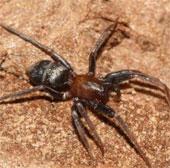 Bật mí nguyên nhân nhện đực ăn thịt bạn tình