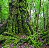 10 khu bảo tồn hoang dã lớn nhất hành tinh