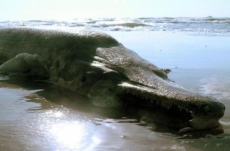 """Cá sông Mê Kông được xếp hạng """"quái thú"""" thế giới"""