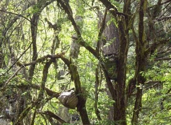 Táng trên cây