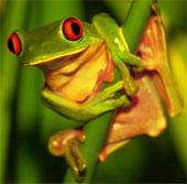 Biến đổi khí hậu đe dọa cả những loài sinh vật phổ biến trên trái đất