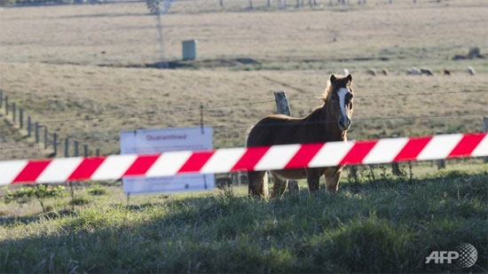 Con ngựa đầu tiên bị nhiễm virus chết người Lyssa