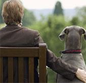 Nuôi chó giúp giảm nguy cơ mắc bệnh tim