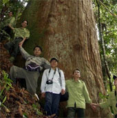 Vinh danh hai loài cây nằm trong Sách đỏ thế giới