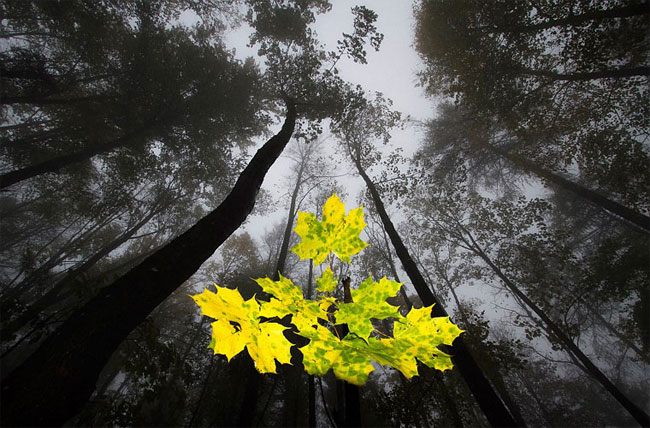 Chùm ảnh thiên nhiên đẹp như trong chuyện cổ tích