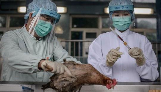 Virus cúm H7N9 tại Trung Quốc đã được kiểm soát