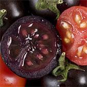 Cà chua tím ra đời