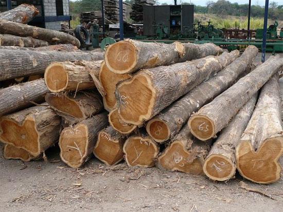Tinh chế thành công bột gỗ chất lượng cao của VN
