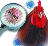 Sức khỏe đời sống-Phát triển bộ dụng cụ xét nghiệm nhanh virus H7N9