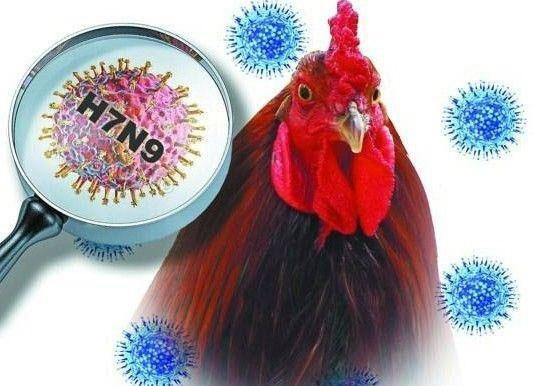 Phát triển bộ dụng cụ xét nghiệm nhanh virus H7N9