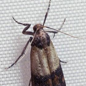 Chuyện ấy càng nhiều, côn trùng càng khốn đốn