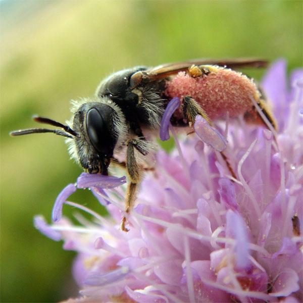 Ảnh đẹp: Ong hút nước mắt của rùa