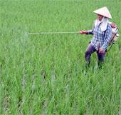 Khảo nghiệm nhiều giống lúa mới tại vụ xuân 2013