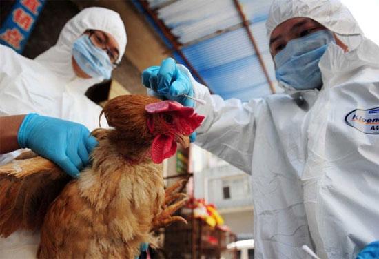 Quan ngại về khả năng kháng thuốc của virus H7N9