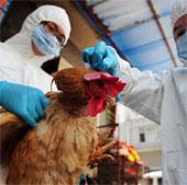 Sức khỏe đời sống-Quan ngại về khả năng kháng thuốc của virus H7N9