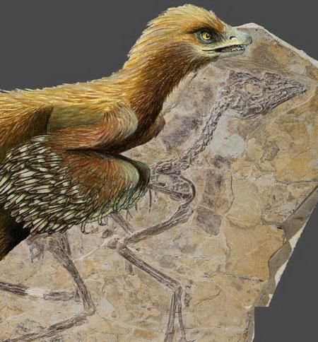 Khủng long lông vũ lâu đời nhất lộ diện trên đá