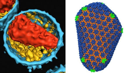 Lần đầu giải mã được cấu trúc bên trong virus HIV