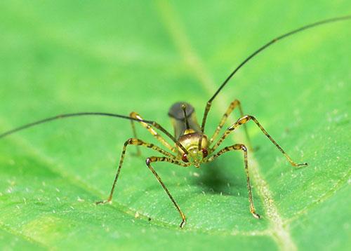 Phát minh mới: Hợp chất tự nhiên xua côn trùng