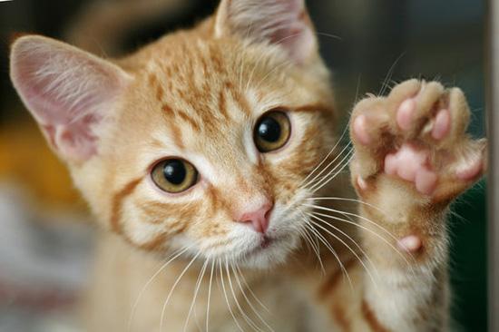 Mèo thuận tay trái